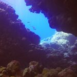 Diving Red Sea